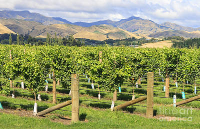 Photograph - New Zealand Vineyard by Patricia Hofmeester
