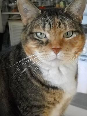 Cat Photograph - Newbie Always Poses by Marian Hebert