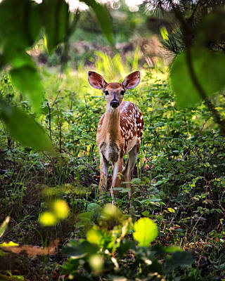 Photograph - Newborn Fawn by Michael Dougherty