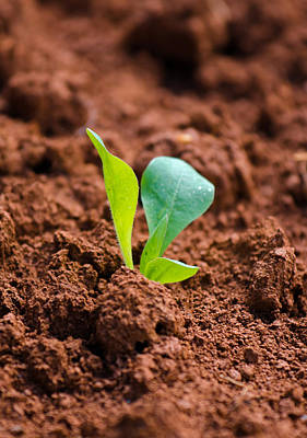 Ambition Photograph - Newborn Plant On Red Acre by Andreas Berthold