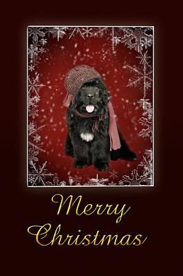 Newfoundland Puppy Photograph - Newfoundland Christmas Card by Waldek Dabrowski