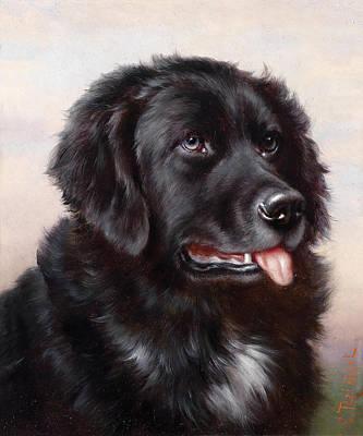 Newfoundland Dog Painting - Newfoundland Dog by Carl Reichert