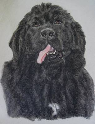 Pastel - Newfoundland Dog by Joan Pye