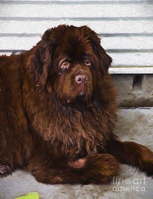 Newfoundland Dog Photograph - Newfoundland Dog by Sheila Smart Fine Art Photography