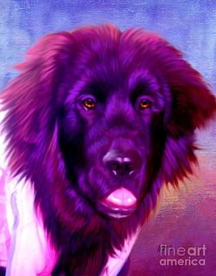 Newfoundland Puppy Painting - Newfoundland by Iain McDonald
