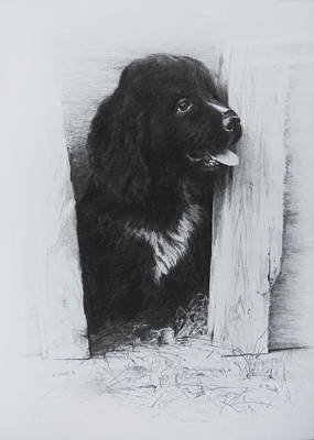 Newfoundland Puppy Drawing - Newfoundland Puppy by Rachel Christine Nowicki