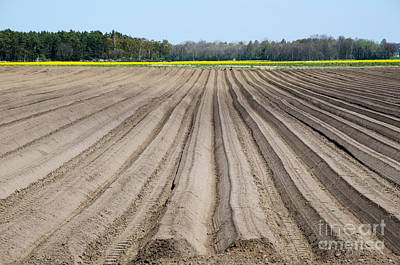 Photograph - Newly Ploughed Rows by Kennerth and Birgitta Kullman