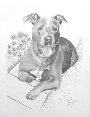 Drawing - Newman by Joette Snyder