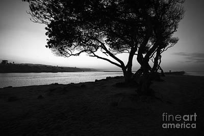 Newport Beach Jetty Tree Black And White Photo Art Print
