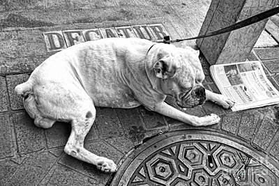 Photograph - Newsworthy Dog In French Quarter Black And White by Kathleen K Parker