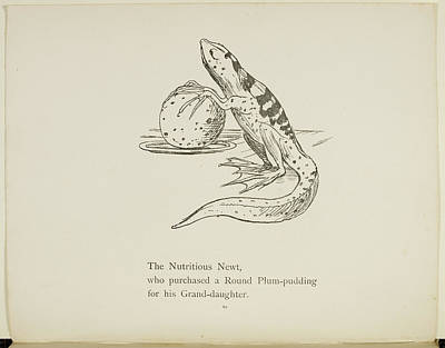 Edition Photograph - Newt by British Library