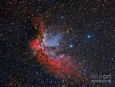 Fantasy Royalty-Free and Rights-Managed Images - Ngc 7380, The Wizard Nebula by Reinhold Wittich
