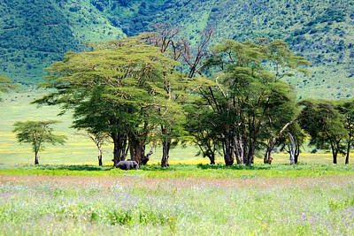 Ngorongoro Elephant Original