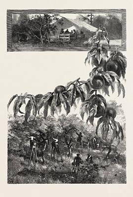 Niagara District, The Fruit Harvest, Canada Art Print