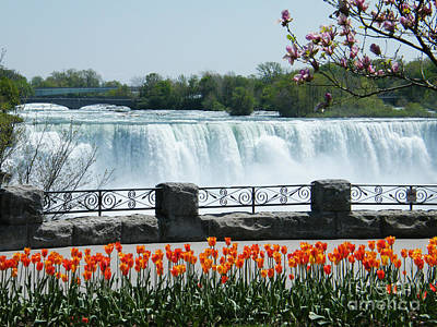 Art Print featuring the photograph Niagara - Springtime Tulips by Phil Banks