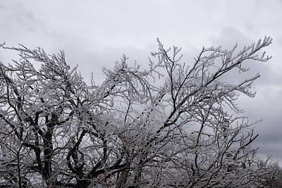 Photograph - Niagara's Artistic Hand - Sparkling Frozen Tree  by Georgia Mizuleva