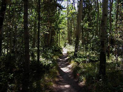 Photograph - Nice Aspen Tree Trail by Thomas Samida