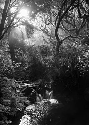 Photograph - Nickel Creek by Alexander Kunz