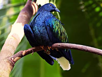 Pigeon Digital Art - Nicobar Pigeon by Chris Flees