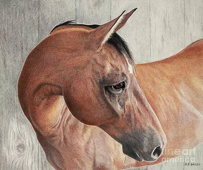 Drawing - Nifty's Look by Helen Bailey