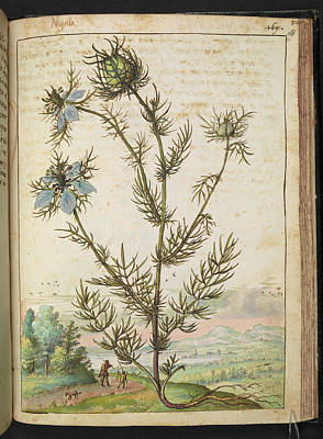 Love-in-a-mist Photograph - Nigella by British Library