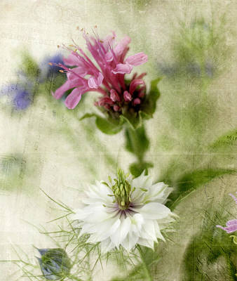 Photograph - Nigella In White by Cathie Richardson