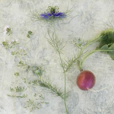 Photograph - Nigella Radish And Thyme by Cathie Richardson