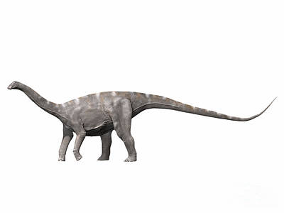 Nigersaurus Taqueti, Early Cretaceous Print by Nobumichi Tamura