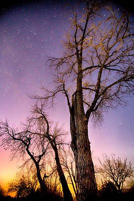 James Insogna Photograph - Night And Day by James BO  Insogna