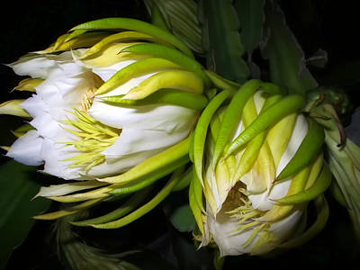 Night Blooming Cereus 31 Art Print by Dawn Eshelman