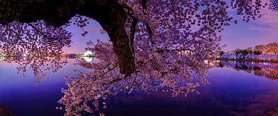 Mirror Photograph - Night Blossoms by Metro DC Photography