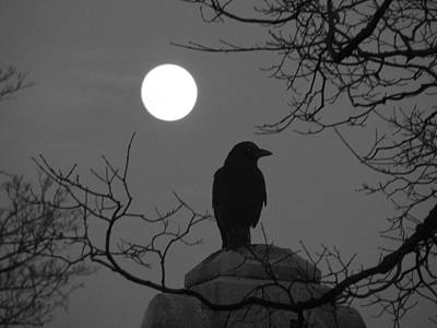 Moonlit Night Photograph - Night Crow And The Full Moon by Gothicrow Images