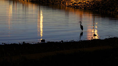 Art Print featuring the photograph Night Fishing - A Great Blue Heron  by Jane Eleanor Nicholas