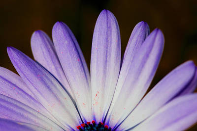Photograph - Night Flower by John Noel