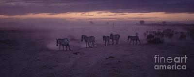 Zebra Photograph - Night Migration by Liz Leyden