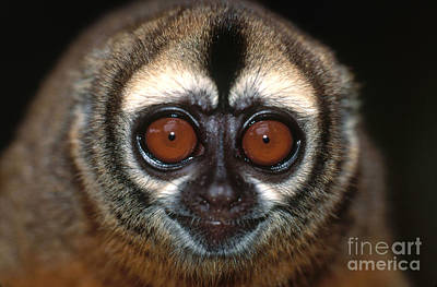 Photograph - Night Monkey by Art Wolfe