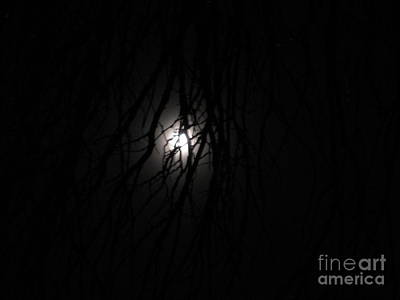 Photograph - Night Moon Through Tree by Barbara Yearty