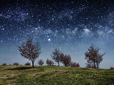 Photograph - Night Of Dreams by Denise Taylor