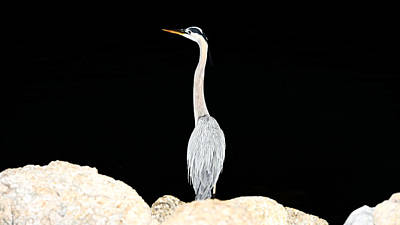 Photograph - Night Of The Blue Heron  by Anthony Baatz