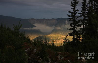 Night On Cougar Mountain Series Vi Art Print by Amanda Holmes Tzafrir