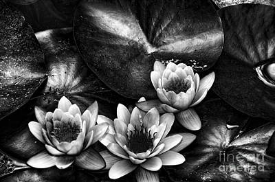 Photograph - Night On The Lily Pond by Brenda Kean