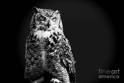 Photograph - Night Owl by Gry Thunes