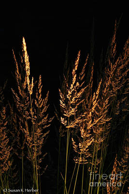 Photograph - Night Prairie Gold by Susan Herber