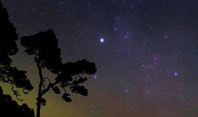 Night Sky Over Trees Art Print