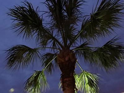 Palms Photograph - Night Sky Through The Palm by Zina Stromberg