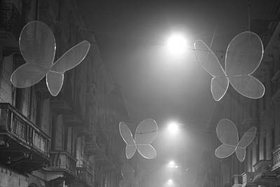 Photograph - Night Time Butterflies by Alex Roe