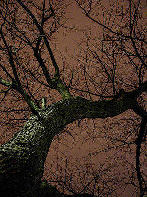 Night Tree Art Print by Michel Mata