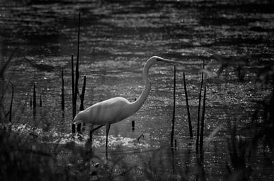 Photograph - Night Wader by Maria Urso