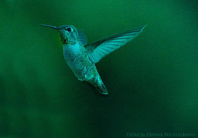 Photograph - Night Wings by Patricia Dennis