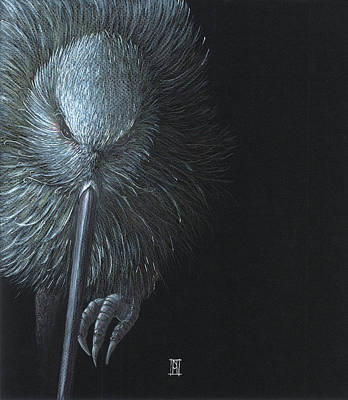 Kiwi Drawing - Nightblindness by Nikki McIvor